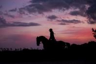 Korzyści, jakie daje umiejętność jazdy konnej