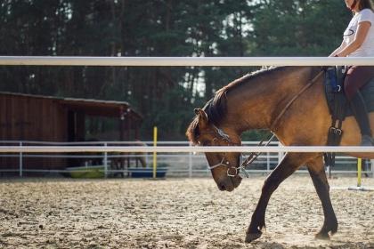 Reguły jazdy konnej na ujeżdżalni